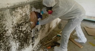 Signs that your home needs mold remediation