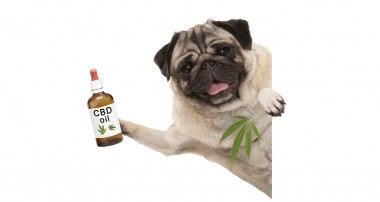 All the right benefits of using CBD oil for pets!