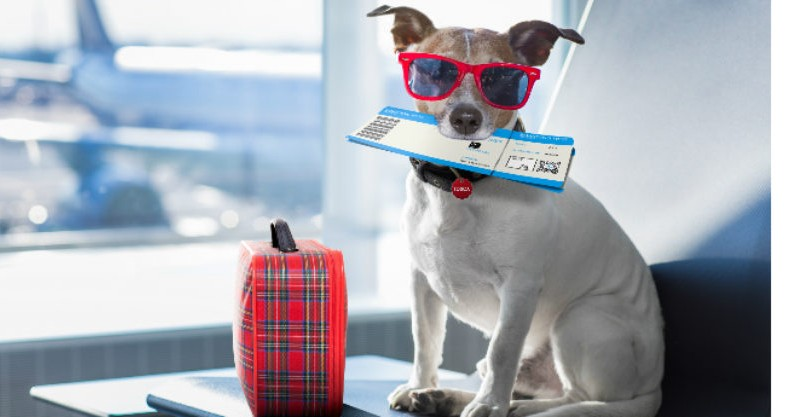 Going on Holiday? What do You Do With Your Pet?